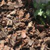 グリーンカーテンの雑草対策-バークチップのマルチで雑草対策&景観 ~グリーンカーテン計画(12)