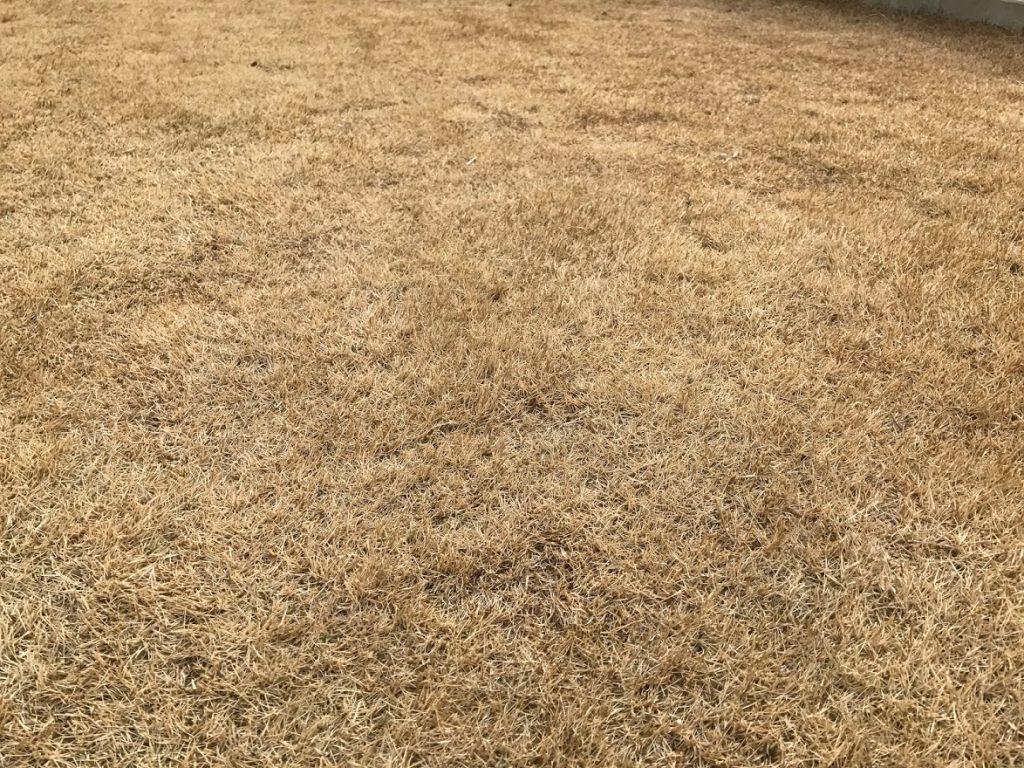 冬の芝生(TM9)