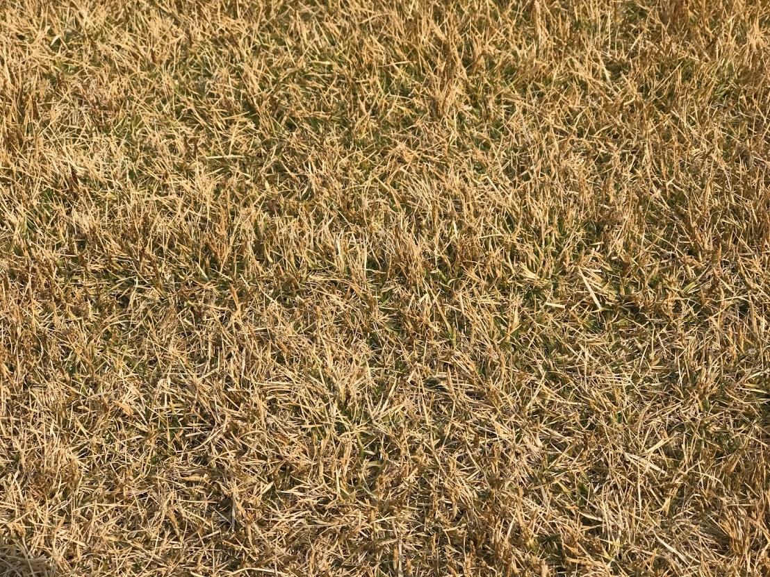 春の芝生(TM9)