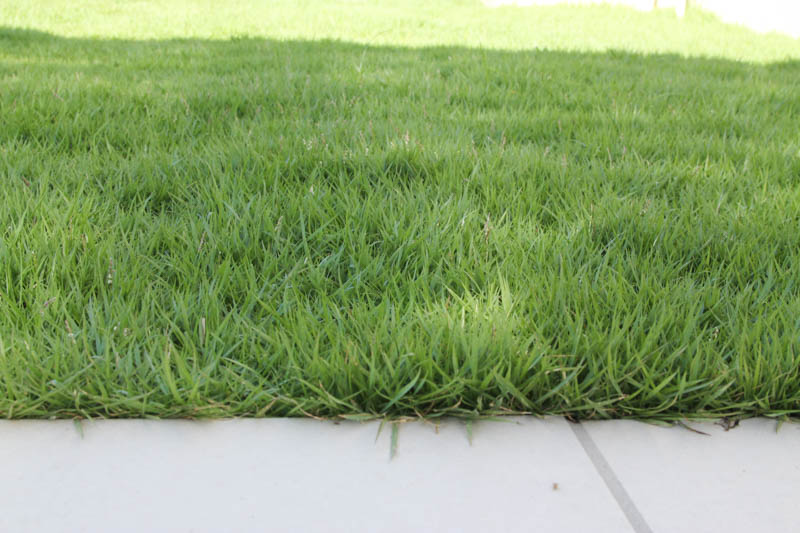 芝刈りのビフォア