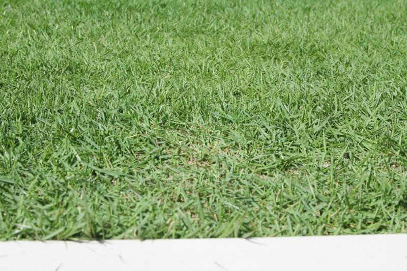 芝刈りのアフター