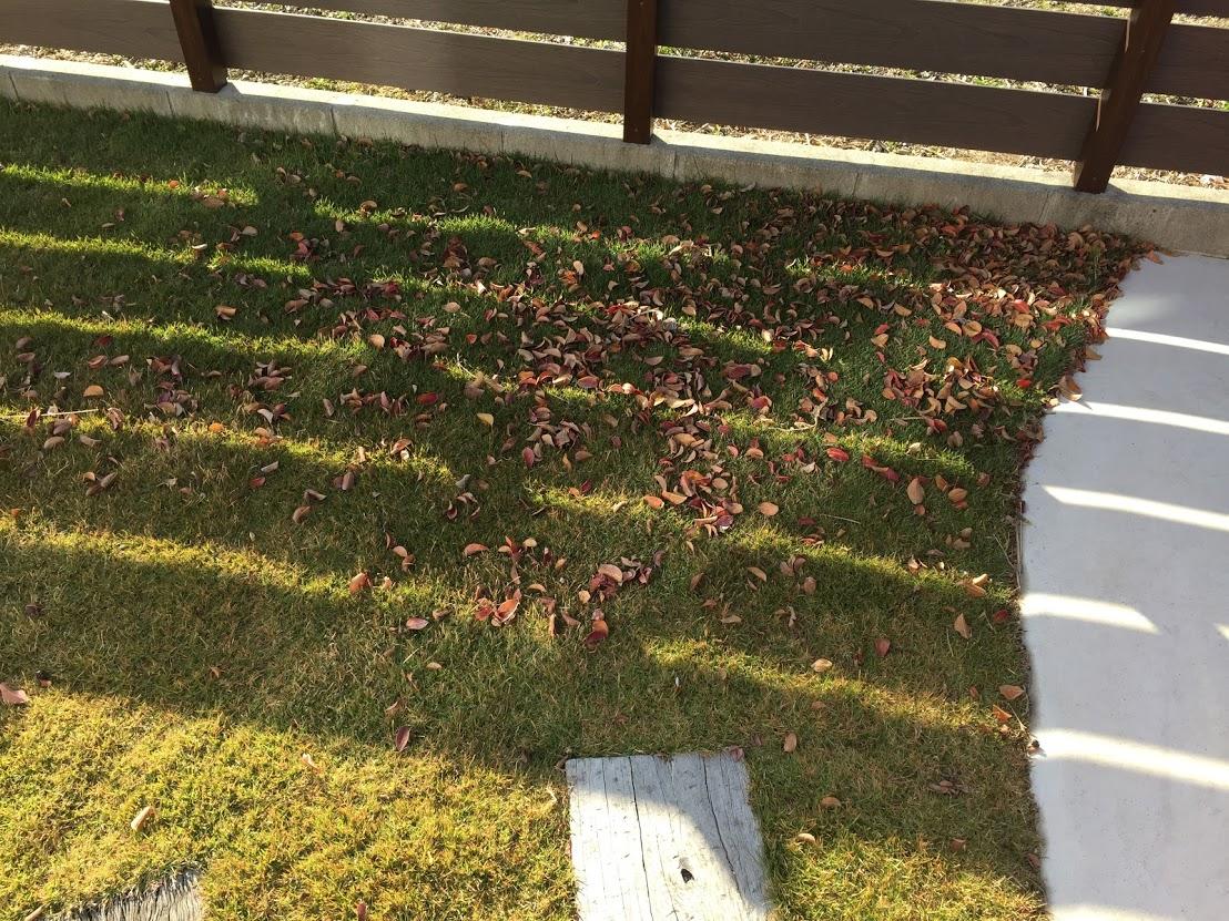 秋の芝生(TM9)